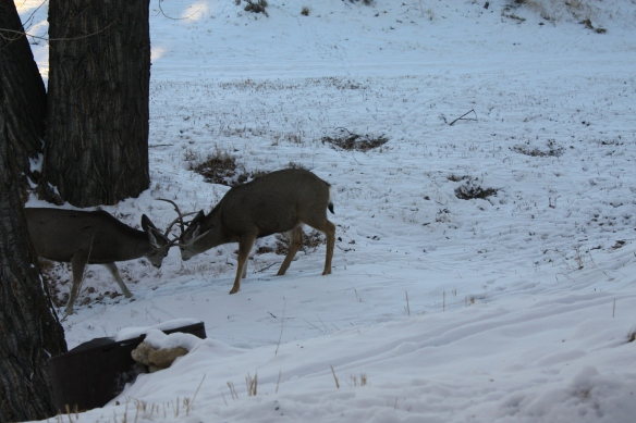A friendly antler exchange . . .
