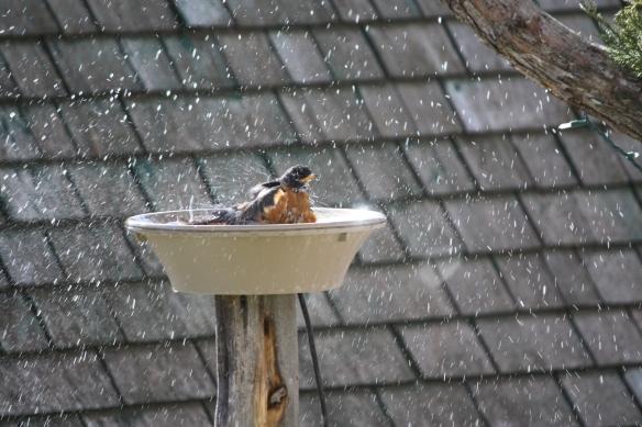 """Ah, warm water bath!"" . . . ."