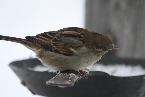 """""""Bird brunch!"""" . . . ."""