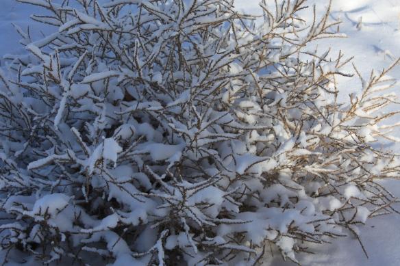 The ubiquitous tumbleweed . . . .
