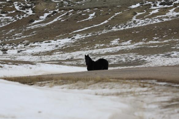 A black horse hangs back . . . .