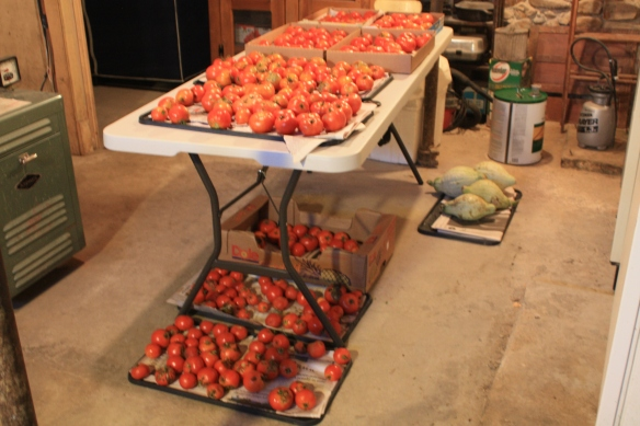 the ripening room . . . .