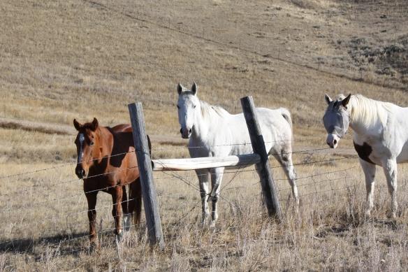 horse social . . . .