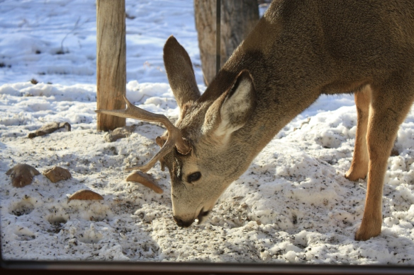 a unihorn deer . . . .