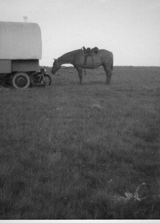 cattle drive 13 (2).jpg