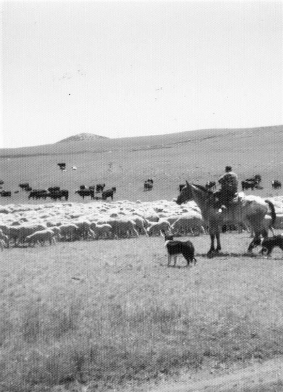 cattle drive 6 (2).jpg